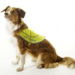 Refleksvest til hunder